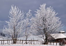 Bäume abgedeckt durch Schnee in der winterlichen Landschaft Stockfotos