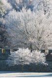 Bäume abgedeckt im Hoarfrost auf einem Wintermorgen lizenzfreie stockfotografie