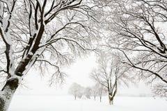 Bäume abgedeckt im Schnee Stockfotografie