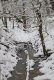 Bäume abgedeckt im Schnee Lizenzfreie Stockfotografie