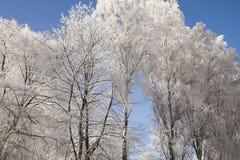 Bäume abgedeckt im Schnee Lizenzfreie Stockfotos