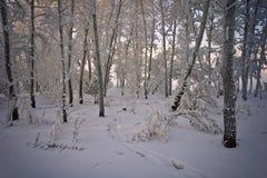 Bäume abgedeckt mit einer starken Schicht Frost stockbilder