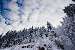 Bäume abgedeckt mit frischem Schnee Lizenzfreie Stockfotos