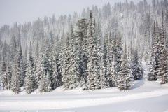 Bäume abgedeckt mit Hoarfrost und Schnee lizenzfreie stockfotografie