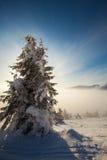 Bäume abgedeckt mit Hoarfrost und Schnee in den Bergen Lizenzfreie Stockfotografie