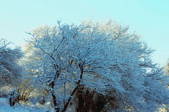 Bäume abgedeckt mit Hoarfrost und Schnee in den Bergen Stockfoto