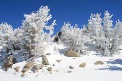 Bäume abgedeckt mit Schnee Lizenzfreie Stockfotos