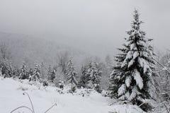 Bäume abgedeckt mit Schnee Lizenzfreies Stockfoto