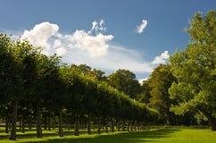 Bäume alignement Lizenzfreie Stockbilder