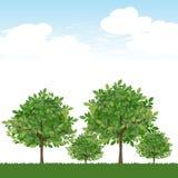 Bäume auf üppigem grünem und blauem Himmel Stockfotos