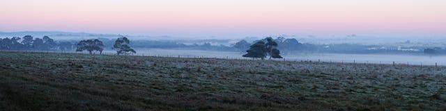 Bäume auf Ackerland im Morgen Lizenzfreies Stockfoto