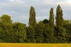 Bäume auf Ackerland und blauer Himmel und Wolken Stockfotos