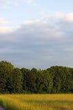Bäume auf Ackerland und blauer Himmel und Wolken Lizenzfreies Stockbild