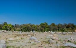 Bäume auf Bank von trockenem Fluss Stockfotos