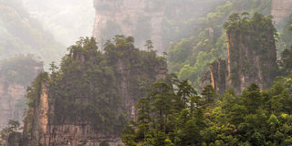 Bäume auf Berg Stockbilder