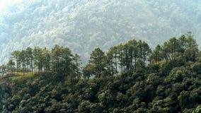 Bäume auf Berg Lizenzfreies Stockbild