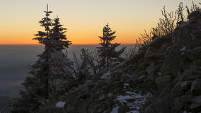 Bäume auf Berg stockfotografie