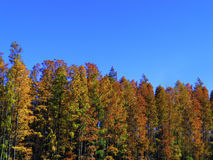 Bäume auf blauem klarem Himmelhintergrund Stockbilder