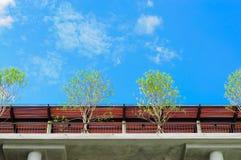 Bäume auf Dachplattform Lizenzfreie Stockbilder