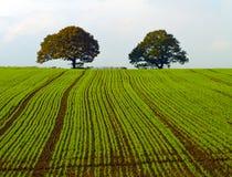 Bäume auf dem Abhang Stockfotografie