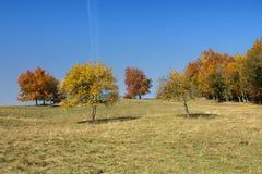 Bäume auf dem Abhangherbst Stockbilder
