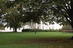 Bäume auf dem das Haus-Rasen Stockbild