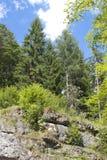 Bäume auf dem Felsen Stockbild