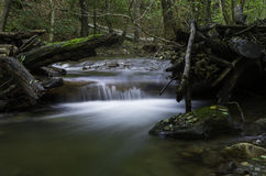 Bäume auf dem Fluss, Daruvar, Kroatien lizenzfreies stockbild