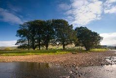 Bäume auf dem Fluss Ure stockfotos