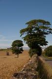 Bäume auf dem Gebiet Stockbilder