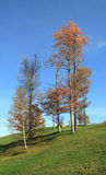 Bäume auf dem Gebiet Stockbild