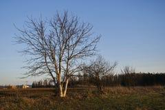 Bäume auf dem Gebiet in der Dämmerung stockfotos