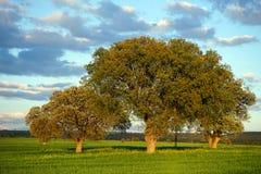 Bäume auf dem grünen Gras Lizenzfreies Stockfoto