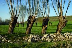 Bäume auf dem grünen Gras Lizenzfreie Stockfotos