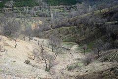 Bäume auf dem grünen Hügel Lizenzfreies Stockfoto