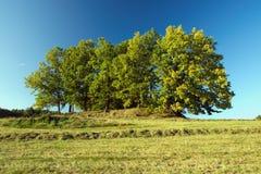 Bäume auf dem Hügel Stockfotos