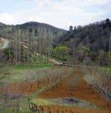 Bäume auf dem Hügel Stockbilder