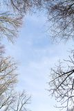 Bäume auf dem Himmelhintergrund Stockfotos
