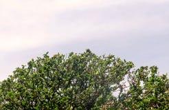 Bäume auf dem Himmelhintergrund Stockfotografie