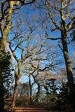 Bäume auf dem Hintergrund des blauen Himmels Lizenzfreies Stockfoto