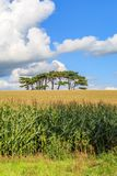 Bäume auf dem Horizont lizenzfreie stockfotografie