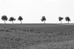 Bäume auf dem Horizont lizenzfreies stockbild
