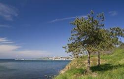 Bäume auf dem Strand lizenzfreies stockbild