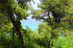 Bäume auf dem Strand Lizenzfreie Stockbilder