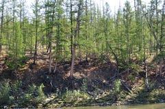 Bäume auf dem Ufer Stockbild