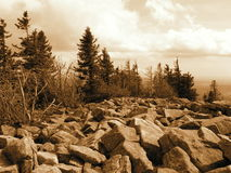Bäume auf den Felsen Lizenzfreie Stockfotografie