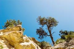 Bäume auf den Felsen Stockfotos