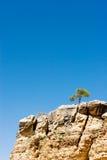 Bäume auf den Felsen Lizenzfreies Stockfoto