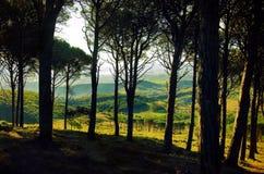 Bäume auf den Hügeln Stockbild