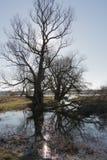 Bäume auf der Flussbank Stockfoto